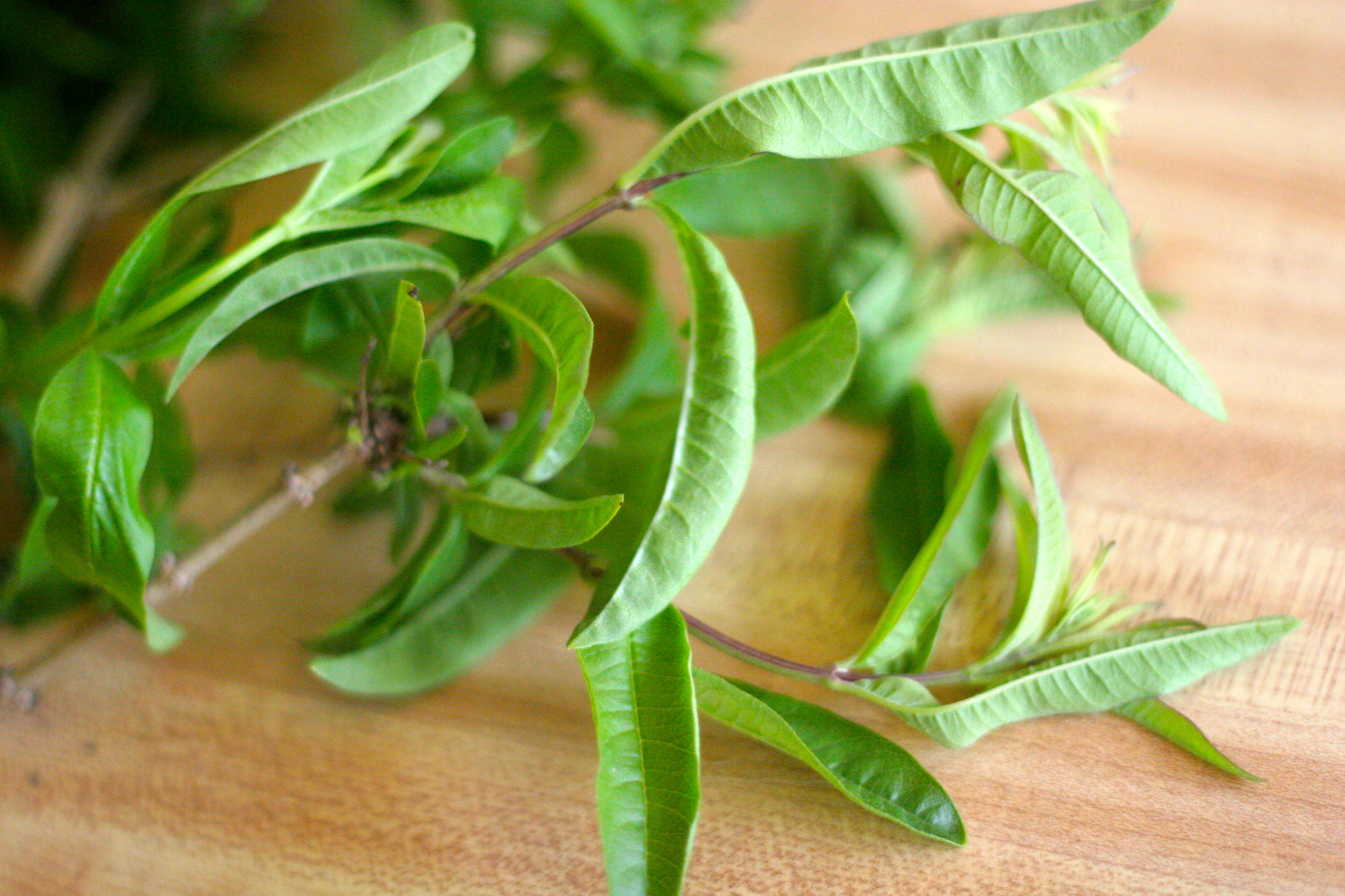... mint and leaves of lemon verbena are lemon verbena mint herb tea