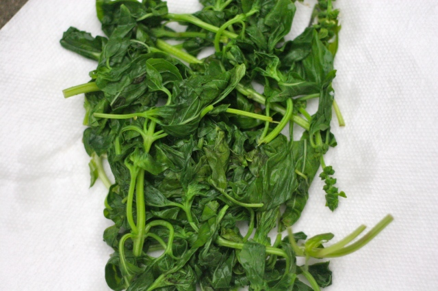 Blanched basil